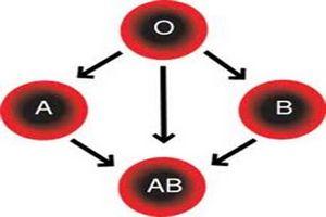 Группа крови 4 отрицательная у мужчин