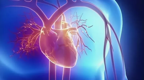 Что такое кардиоскопия сердца