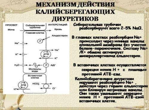 mehanizm kalijsberegauschih diuretikov