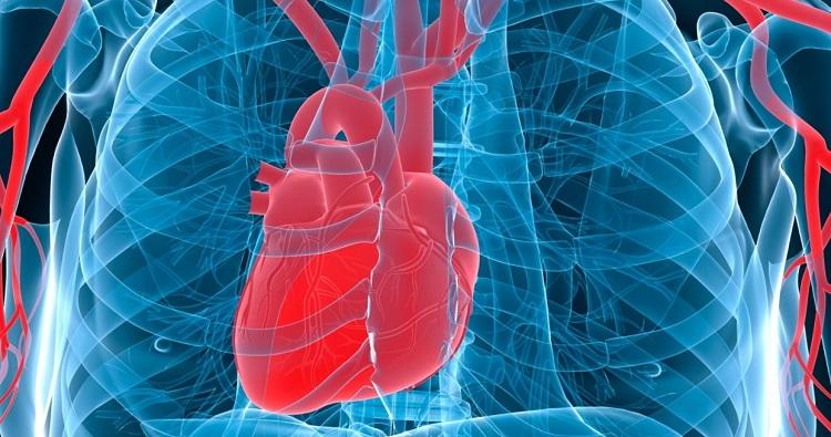 Увеличенное Сердце
