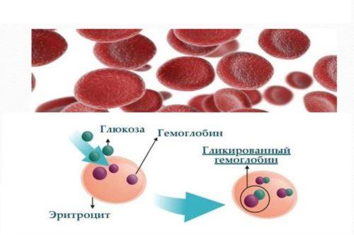 Свободный гемоглобин сыворотки крови