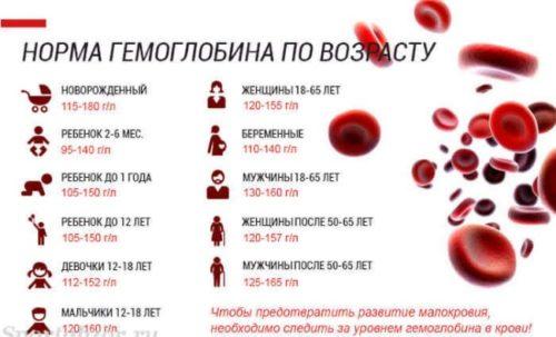 normy gemoglobina