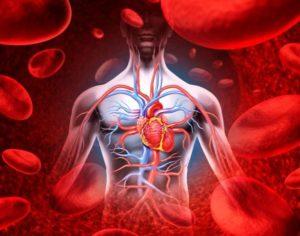Обновление крови в организме человека